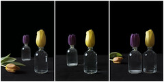 Tulips Triptych (Kitty Terwolbeck) Tags: flowers bloemen tulips tulpen art kunst artwork black coulorful colorful darkbackground blackbackground triptych drieluik spring lente purple paars yellow geel orange oranje vase vaas glass glas