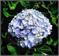 Cores da natureza. #flores #flowers #orquideas #orquidea #naturalbeauty #natureza #naturephotography #jardim #floreslindas #revistaxapury #eunotg #criacaodedeus #obradivina #instaflowers #instaflores #ortencias #instamotox2 #garden #floricultura #instagra (ederrabello2014) Tags: photooftheday floricultura instamotox2 naturephotography instalike instagram instagrambrasil flowersofinstagram naturalbeauty eunotg orquideas natureza obradivina orquidea jardim instaflores flowers floreslindas flores revistaxapury flowerstagram flowersbouquet momentosregistrados ortencias criacaodedeus flowerslovers orchids instaflowers garden orchid