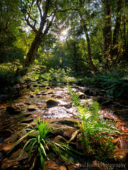 Jubilee Creek Twinkle (Panorama Paul) Tags: paulbruinsphotography wwwpaulbruinscoza southafrica southerncape gardenroute knysnaforest ferns jubileecreek sunflare starburst indigenousforests nikond800 nikkorlenses nikfilters