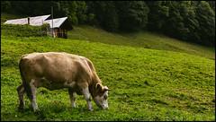 _SG_2018_09_9021_IMG_0573 (_SG_) Tags: schweiz suisse switzerland daytrip tour wandern hike hiking nature aussicht view trail mountain berge loop brienzer rothorn emmental alps summit lake brienz bahn steam train