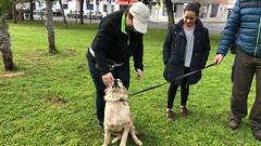 IMG_8567 (Doggy Puppins) Tags: educación canina adiestramiento canino perro dog