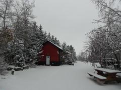 HTMT (Mr. Happy Face - Peace :)) Tags: snow albertabound art2018 winter alberta canada trees yyc saskatoonfarm outdoors weather snowing love wtbw treemendoustuesday