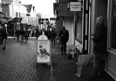 My Dogs Bigger than Yours (Bury Gardener) Tags: burystedmunds suffolk england eastanglia uk streetphotography street streetcandids snaps strangers candid candids people peoplewatching folks 2018 nikond7200 nikon e bw blackandwhite monochrome mono abbeygatestreet