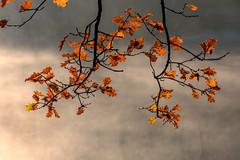Thiergartenweiher (janeway1973) Tags: thiergartenweiher deutschland hessen büdingen germany pond lake see teich bäume wald trees forest morning morgen fog mist nebel dunst foliage herbstlaub autumn leaves colorful bunt farbenfroh herbst november water wasser