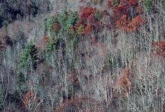 Red River Gorge, Kentucky (Roger Gerbig) Tags: redrivergorge kentucky rogergerbig canoneos3 canonef28105f3545 kodachrome200 kl200 slidefilm 135film 35mm fullframe