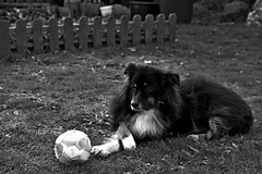tobie foot (Luis-Manzanares Didier) Tags: chien dog tamron 2470 nikon d750 noiretblanc