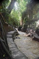 Monkey Forest, Bali, indonesia. (Manoo Mistry) Tags: monkeyforest indonesia bali jungle forest holiday nikon nikond5500 tamron tamron18270mmzoomlens