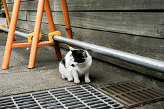 neko-neko2274 (kuro-gin) Tags: cat cats animal japan snap street straycat 猫 gx1