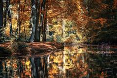 Autumn Mirrored (michel1276) Tags: autumn herbst wald forest nature natur trees bäume wasser water bach halternamsee sythen sonya7iii