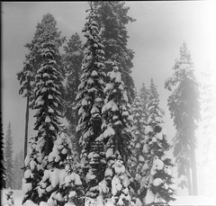 shasta snow on 4x5 film (Garrett Meyers) Tags: graflexseriesd4x5 mtshasta shasta garrettmeyers garrett meyers largeformat lf 4x5 4x5film graflex graflex4x5 film filmphotographer graflexphotographer blackandwhitefilm homedeveloped handheld snow whitemountain mountains landscape monochrome northerncalifornia northwest storm freezing cold