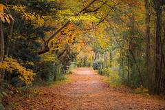 Walking Trail – Lullwater Nature Preserve