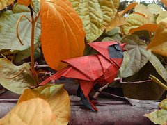 Red Beauty (Rohit KO) Tags: origami cardinal rohit ko roman diaz bird double unryu paper paperfolding red black papercraft