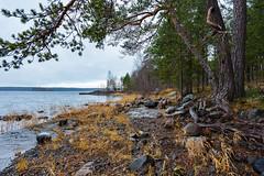Ukshozero (gubanov77) Tags: kareliarepublic karelia russia карелия укшозеро ukshozero nature landscape lake