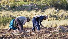 18 2770 - Pérou, lac Titicaca, péninsule de Capachica (Jean-Pierre Ossorio) Tags: pérou titicaca campagne travauxdeschamps paysan