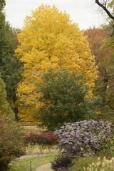 Philbrook fall foliage 2018-1 (alnbbates) Tags: november2018 tulsa philbrook gardens fallcolors