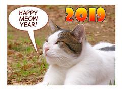 Happy New Year to you all! (hamapenguin) Tags: newyear 2019 animal cat straycat neko card newyearcard 猫 ネコ 野良猫 comiclife