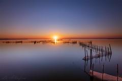 La Albufera (Luis JG) Tags: albufera lago valencia agua net water sunset atardecer puestadesol paisaje landscape sun sol horizonte horizon cielo sky calma calm serenity serenidad largaexposición longexposure sticks reeds cañas palos canoneos5dmarkiv ef1635mmf28liiiusm filtro filter paz peace subtly sutilmente