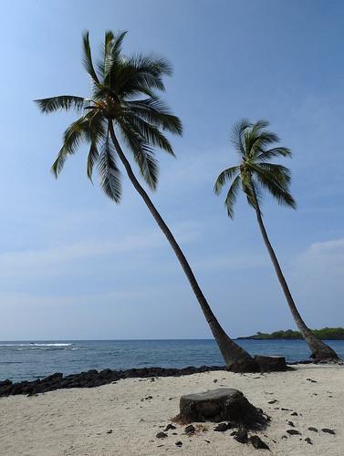 Honaunau Bay - Two Palms