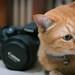 Canon Cat! 📷🐱
