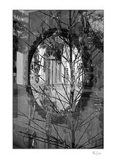 Upon Reflections (radspix) Tags: minolta srt 101 58mm rokkorpf f14 arista edu ultra 100 pmk pyro