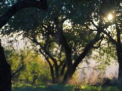 Spain Andalusia Sierra Nevada Alpujarras © Spanien Andalusien © Spain Andalusia © Andalucía La Alpujarra Granadina © (hn.) Tags: yegen alpujarradelasierra spain europe andalusia andalucia spanien eu europa andalusien heiconeumeyer copyright copyrighted tp2018anda es sierranevada laalpujarra alpujarras provinciadegranada alpujarragranadina españa baum tree pflanze plant nature natur mandelbaum prunus prunusdulcis almond almondtree almendro árbol gegenlicht backlight agriculture rural ländlich contraluz