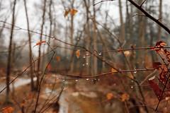 Cedarville St Forest 12-02-2018 (Terrynet1) Tags: 2018 december conon fog cedarvillestateforest 5dmkii landscape foggy water drops branch