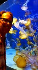 20180920_164427 (bryandkeith) Tags: unitedstates aquariumofthepacific longbeach