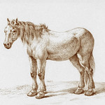 Standing horse by Jean Bernard (1775-1883). Original from The Rijksmuseum. Digitally enhanced by rawpixel. thumbnail