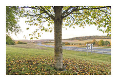 _PRE8322 (Jordane Prestrot) Tags: ♎ jordaneprestrot route road ruta autoroute highway autopista arbre tree árbol crépuscule dusk crepúsculo
