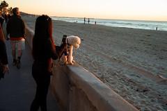 Mission Beach, California (bill mccarroll) Tags: wall dog sandiego summilux50 leicam9 california missionbeach