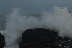IMG_0578 (monika.carrie) Tags: monikacarrie wildlife scotland aberdeen waves