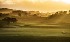 this place.... (Wöwwesch) Tags: sunset hills soft winter eifel wonderful feeling walk fields sheep trees shadws home path golden alone intothesun