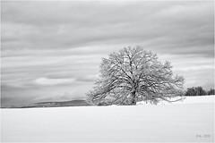Hiding in the White... (Ody on the mount) Tags: anlässe bäume em5ii fototour himmel mzuiko1250 omd olympus pflanzen rahmen schnee schneeschuhtour schwäbischealb solitär wald winter wolken bw clouds frame monochrome sw sky trees woods