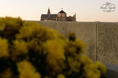 #catedral #cathedral #mezquita #mosque #atardecer #sunset #ciudad #city #córdoba #andalucía #españa #spain #turismo #tourism #turismospain #paisaje #landscape #planta #plant #photography #photographer #sonyimages #sonyalphasclub #sonystas #sonyalpha #sony (Manuela Aguadero PHOTOGRAPHY) Tags: spain mosque sonyα6000 mezquita manuelaaguaderophotography city sonyalpha sonyimages catedral tourism españa sony6000 sonyalphasclub photographer paisaje cathedral atardecer córdoba turismospain planta andalucía turismo sonya6000 sonystas ciudad sunset plant sonyalpha6000 landscape photography