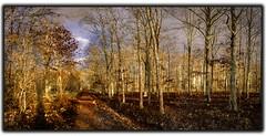 foret de Chambord  l'hiver (angelobrathot) Tags: panorama foret nature allées