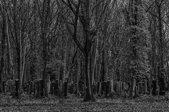 Forest edge (Giara,) Tags: germany berlin jewishcemetery weissensee trees forest woods cemetery graveyard tombstones