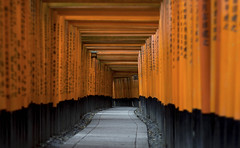 Fushimi Inari (Andrew Allan Jpn) Tags: japan travel colour red kyoto fushimi persepctive shrine temple architecture religion shinto zen
