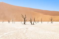 _RJS4678 (rjsnyc2) Tags: 2019 africa d850 desert dunes landscape namibia nikon outdoors photography remoteyear richardsilver richardsilverphoto safari sand sanddune travel travelphotographer animal camping nature tent trees wildlife