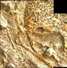 Specked Rocks and Veins, variant (sjrankin) Tags: 2november2018 edited nasa mars msl curiosity galecrater closeup dust sand panorama vein lightcolored speckled rocks