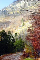 Пейзаж с дорогой (tatianatorgonskaya) Tags: orjen montenegro montenegrin mountains mountain travel traveling trip walk hiking europe balkans balkanstravel balkan nature trekking crnagora opstinahercegnovi landscape view черногория горы горныепрогулки хайкинг треккинг фотографиичерногории фоточерногории општинахерцегнови блог блогочерногории блогопутешествиях блогожизнизарубежом европа отдых активныйотдых отдыхвчерногории туризм орьен природачерногории природа осеньвчерногории ноябрьвчерногории пейзаж