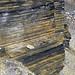 New Albany Shale (Upper Devonian; MacDonald Knob Outcrop, Bullitt County, Kentucky, USA) 9