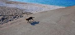 Cat walk (Marite2007) Tags: seascape beach nobody cat walk sunny kremasti dodecanese rhodes islands greece