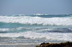 DSC_0896 (afagen) Tags: california pacificgrove montereypeninsula asilomar beach pacificocean ocean asilomarstatemarinereserve