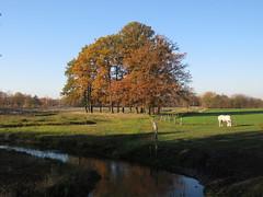 IMG_9093 (Momo1435) Tags: eindhoven brabant waalre herfst herfstkleuren netherlands autumn fall colors