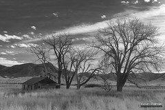 St Xavier Homestead (kevin-palmer) Tags: november fall autumn nikond750 tamron2470mmf28 stxavier montana old abandoned house homestead wooden morning sunny clouds blackandwhite monochrome trees cabin hills grass