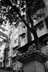 (a.pierre4840) Tags: olympus xa 35mm f28 35mmfilm ilford ilfordhp5 hp5 hp5plus bw blackandwhite monochrome noiretblanc hongkong architecture tree urban decay kowloon trees