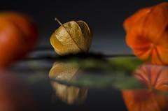 Brown Physalis (Martin Bärtges) Tags: braun brown spiegelung reflexe reflection flash light orange studio colorful farbenfroh nikonphotography nikonfotografie d7000 nikon flowers blossoms blumen blüten pflanzen plants