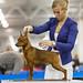 Съёмка в ринге и вне ринга на выставках собак