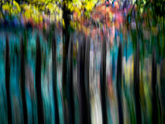 behind the fence - blue (szélléva) Tags: icm intentionalcameramovement autumn fall beautiful nature colours abstract trees arborvitae