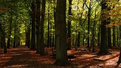 Walking The Dog (jo.misere) Tags: pietrsheim lanaken bomen trees dog hond